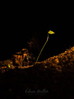 Photo: Edwin Muller Small seedling in a dark place